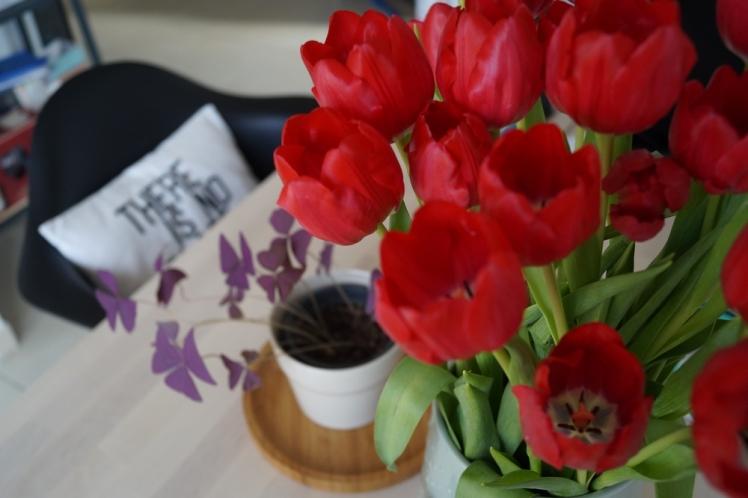 tulipes-oxalis-coussin-germain-eames